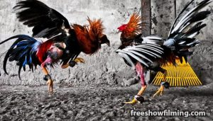 Hal-Baru-Yang-Harus-Anda-Ketahui-Ketika-Bermain-Sabung-Ayam